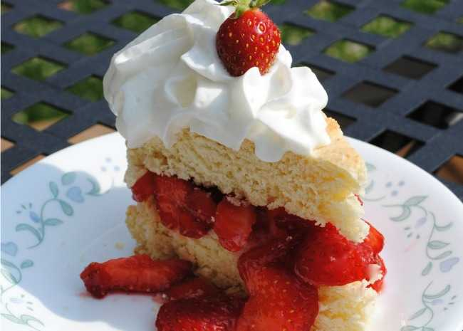 840004 Strawberry Shortcake Photo by Pam Ziegler Lutz 650x465