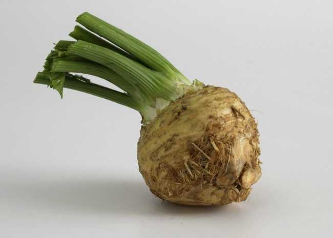 Celeriac. Photo by Meredith