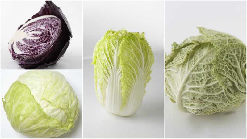 Four Types of Cabbage