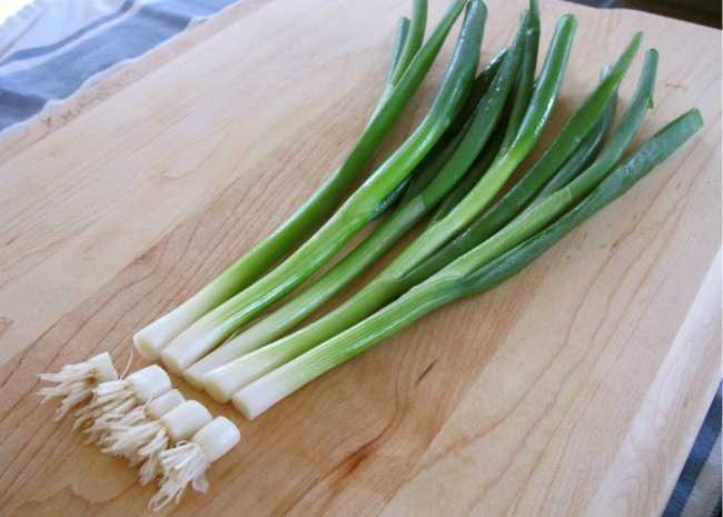 Green Onions Cut Ends Photo by Vanessa Greaves