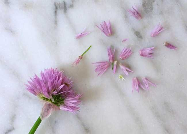 Chive Flowers Separated from the Head