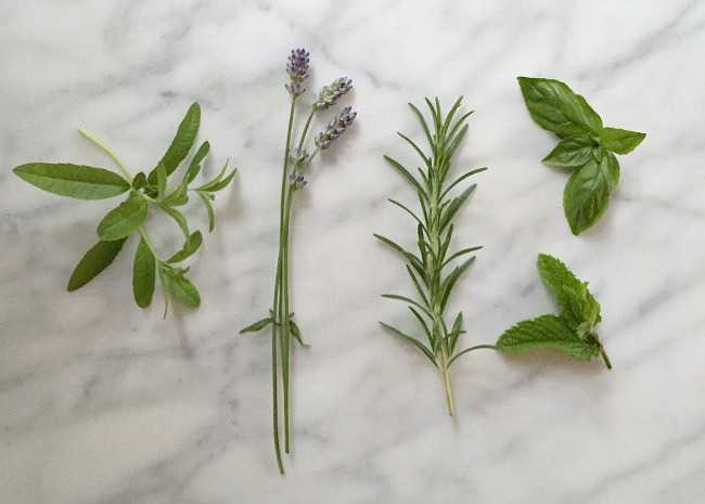Garden Herbs for Simple Syru