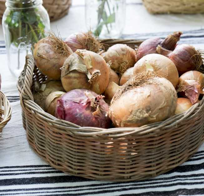 102316374_Onions-in-a-Basket_Photo-by-Meredith.jpg