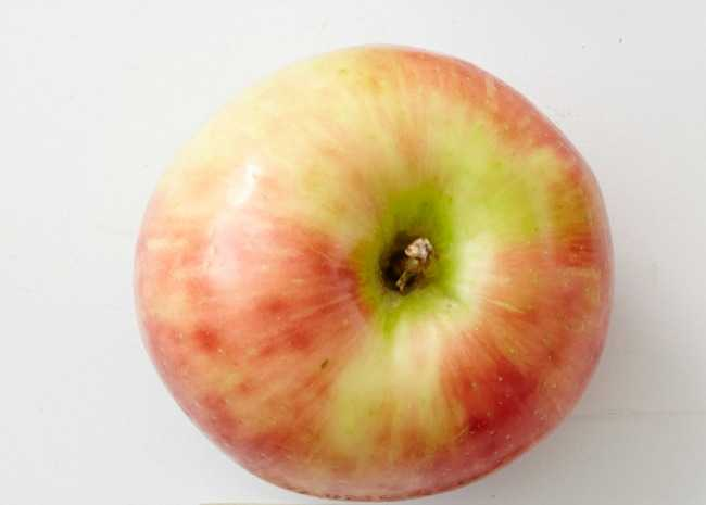 102373810-Honeycrisp-Apple-Photo-by-Meredith-resized.jpg