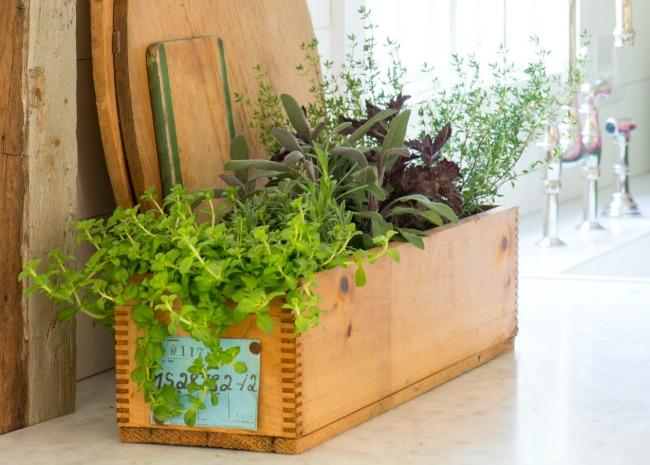 How to Grow an Indoor Kitchen Herb Garden